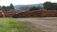 伐採された丸太