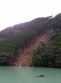 伐採され続けていく森林01