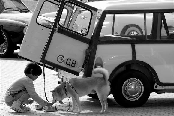 愛犬-1_R