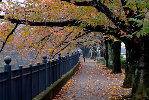 深秋の候-1_R