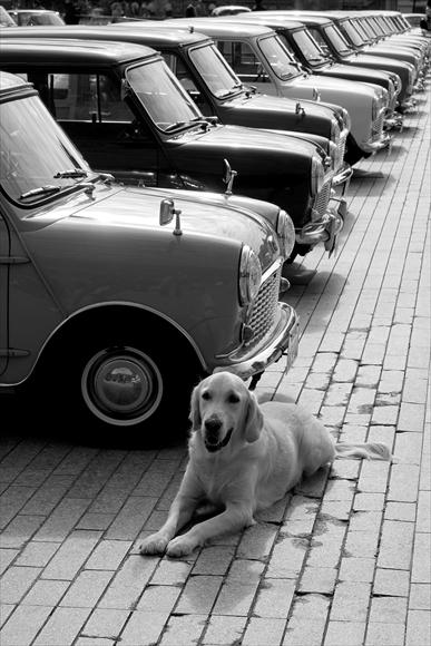 番犬-1_R