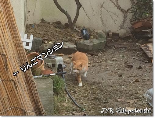 ouchi161120_5.JPG