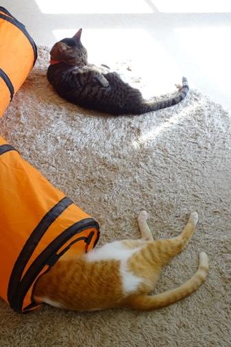DSC00462 - 行き倒れ猫