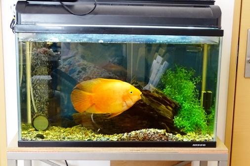 DSC00455 - 熱帯魚
