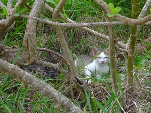 DSC02613 子猫