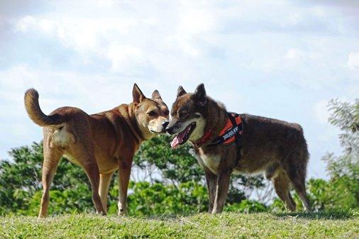 犬イベントf大型 DSC01349