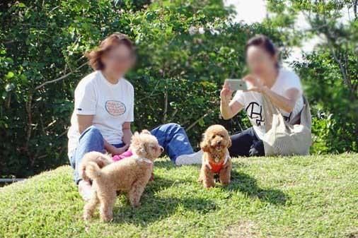 犬イベントd小型 DSC01217