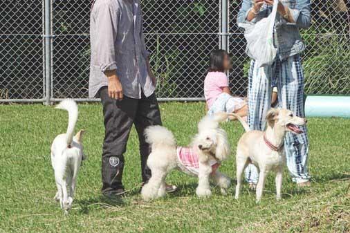 犬イベントg白中 DSC01298