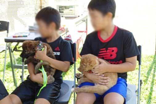 犬イベントi譲渡 DSC01290