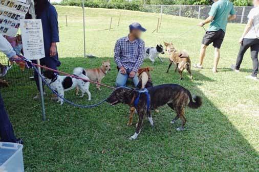 犬イベントk大型 DSC01277
