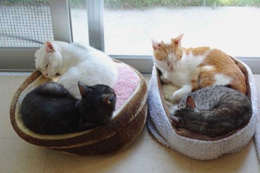 窓際の猫団子 DSC01497