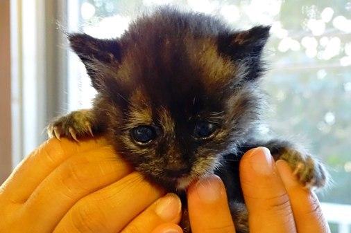 赤ちゃん猫b DSC01638