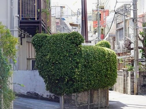 犬型生垣 DSC05954