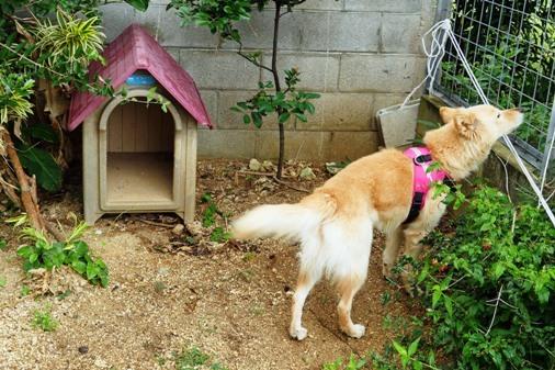 犬小屋a P1070030