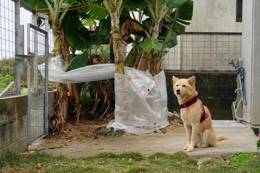 犬小屋b P1070038