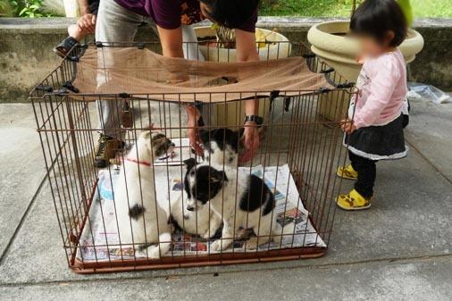 P1070217 - 4子犬