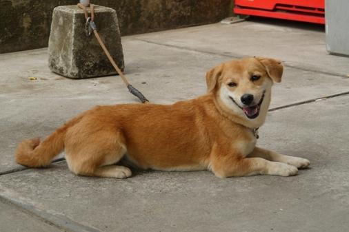 P1070288 - 成犬