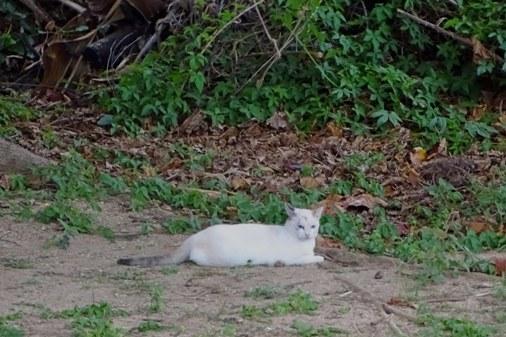 公園猫a DSC01703