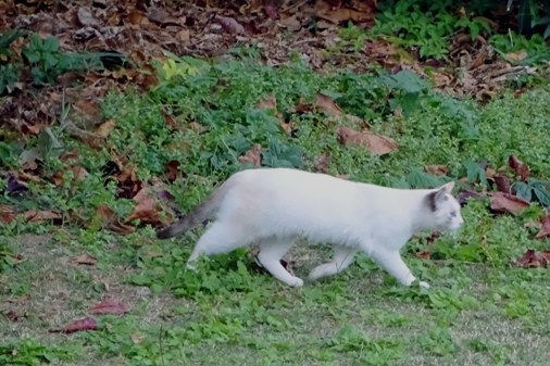 公園猫b DSC01705