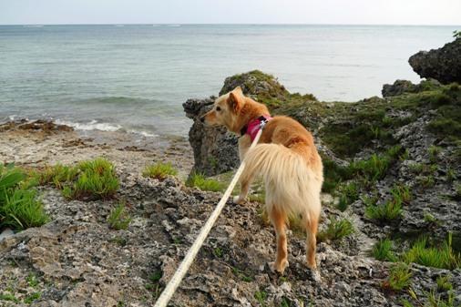 浜散歩a P1070394