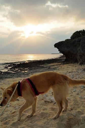 浜散歩c P1070402