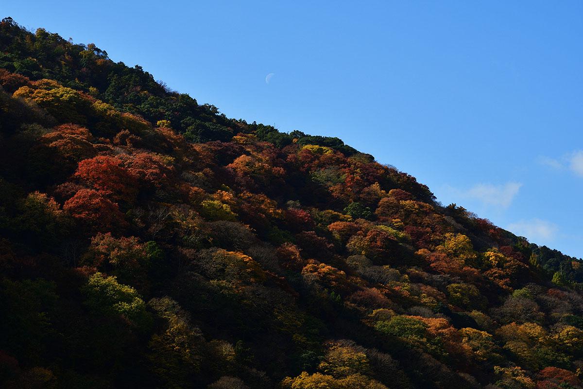 arasiyama_161122_0502_1200.jpg