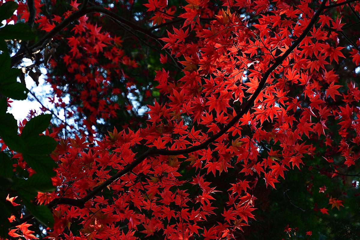 koumyouji_161122_0763_1200.jpg