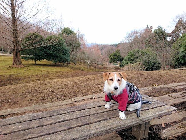 2017長岡公園004