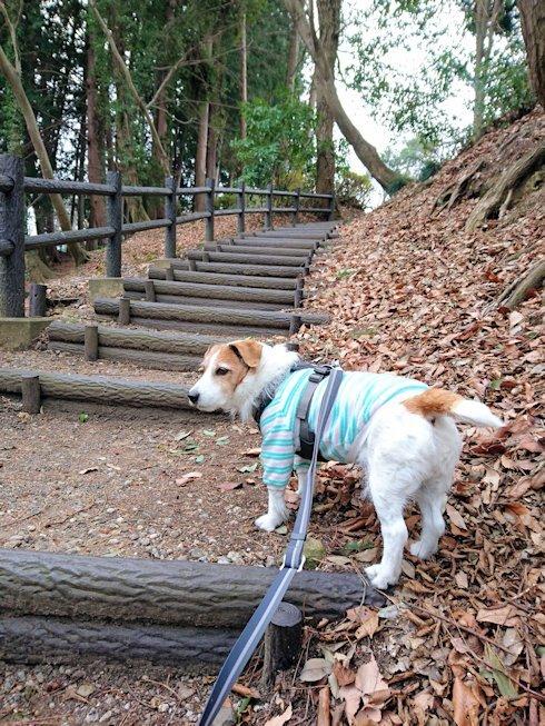2017散歩002