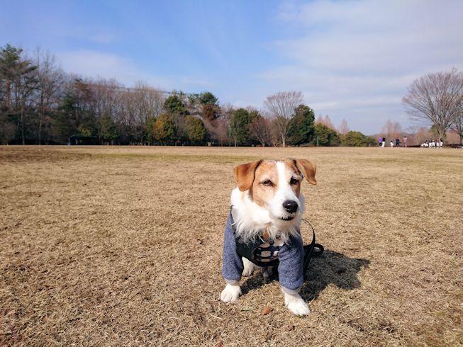 2017長岡公園036