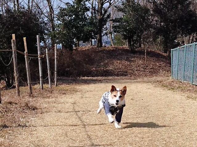 2017長岡公園040