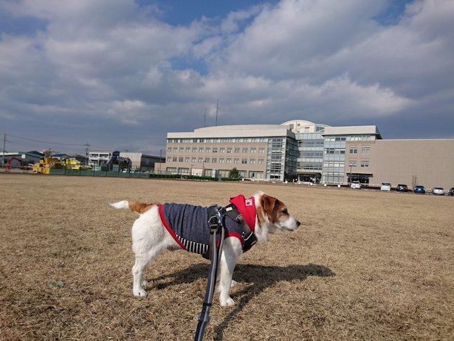 2017散歩021