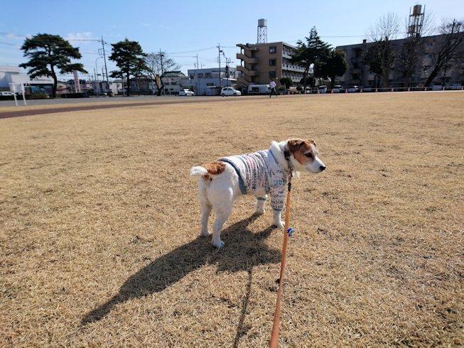2017散歩027