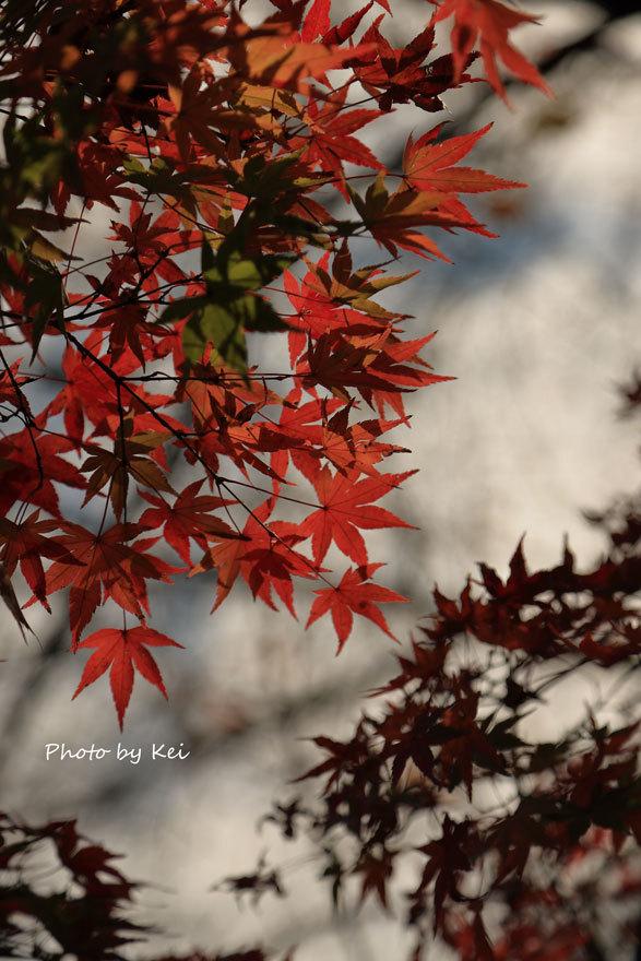 kyoto334.jpg