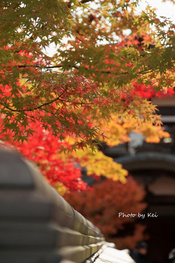 kyoto335.jpg