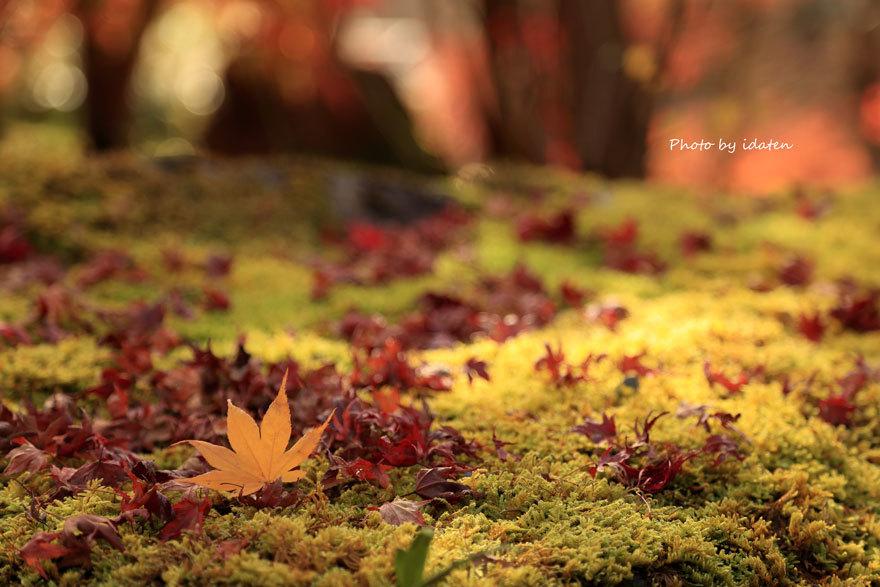 kyoto337.jpg