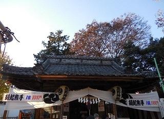 kumanotori2.jpg