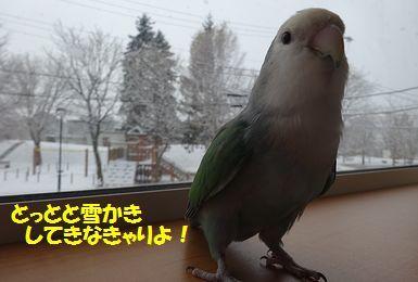 初雪うりまろ2