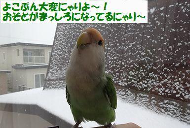 初雪うりまろ3