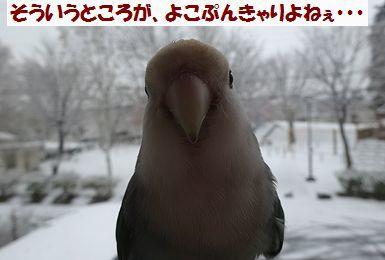 初雪うりまろ7
