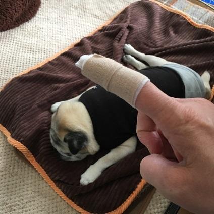 指怪我した