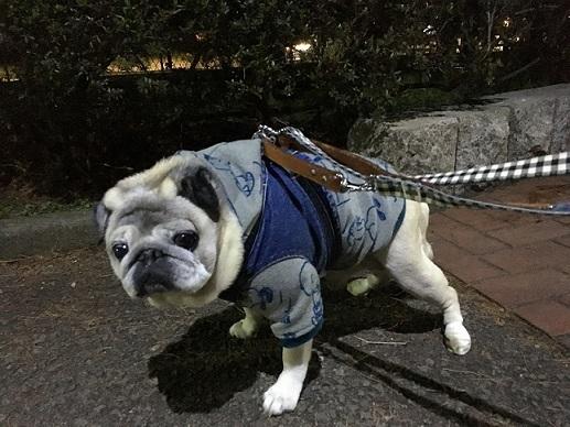 夜散歩頑張ってます