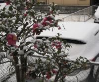 1-15雪