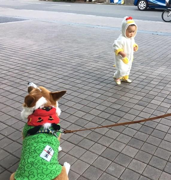 横切る鶏チビ