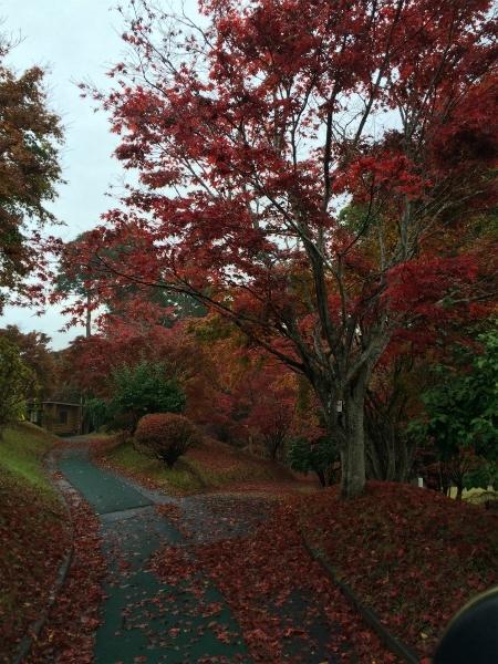 161122ハイツリー紅葉