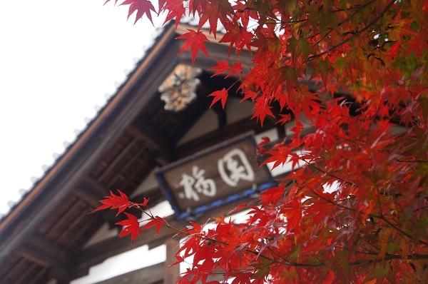 紅葉と宝福寺方丈と並ぶ庫裏?の建物