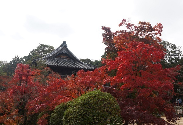 宝福寺方丈付近から仏殿を望む