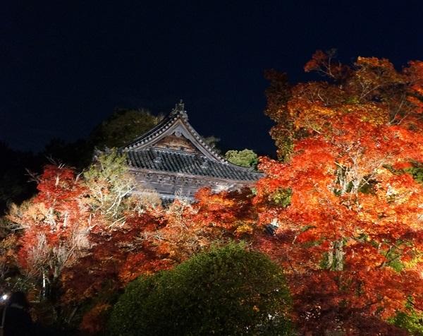 日中と同じアングルの宝福寺方丈付近から仏殿を望む