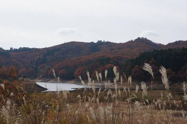 晩秋の恩原湖とススキ