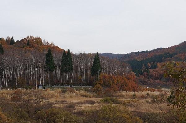 高原らしく白樺の林がありました☆